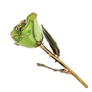 Allmygold Jewelers Peridot Long Stem Dipped 24K Gold Trim Genuine Rose in Gift Box 74