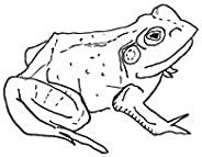 Bull Frogs Croon (and Other Songs)