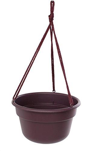 Bloem DCHB1256-12 12-Pack Dura Cotta Hanging Basket/Planter, 12-Inch, Exotica by Bloem