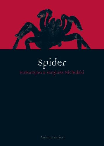 Spider (Animal)
