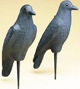Flambeau Outdoors Hard Body Crow Specialty Decoy 12-Pack Hunting Decoys