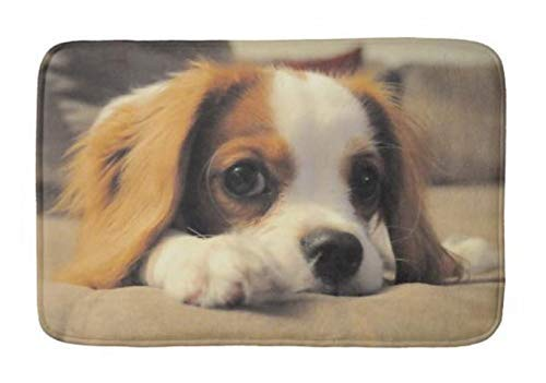 GTdgstdsc Cavalier King Charles Spaniel Absorbent Super Cozy Bathroom Rug Doormat Welcome Mat Indoor/Outdoor Bath Floor Rug Decor Art Print with Non Slip Backing 30