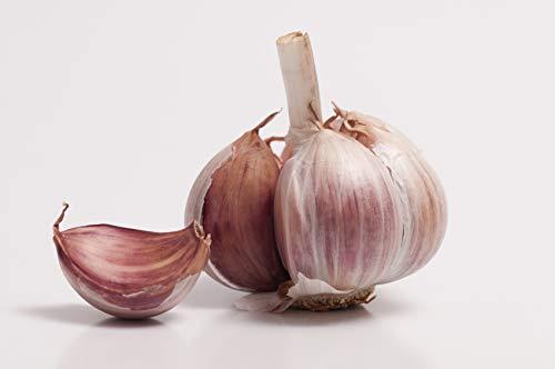 (Purple Garlic Bulbs-4 Bulbs-Fresh Garlic Bulbs Green Organically Grown Non GMO Great for Planting Eating Best Condiment)