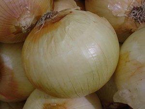 David's Garden Seeds Onion Texas Early Grano DGS3010 (White) 200 Organic Heirloom Seeds