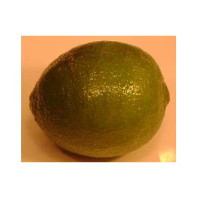 Thornless Mexican Key Lime- (2 Year Old) Can not Ship Any Citrus Outside The State of Texas : Garden & Outdoor