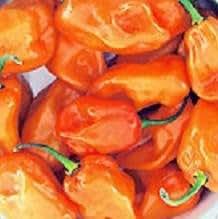 Pepper Habanero Magnum Orange 250 seeds