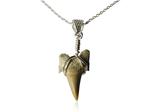 Otodus Shark Tooth Pendant On Sterling Silver Chain