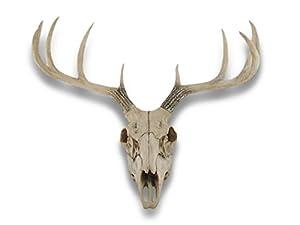 Amazon Com 10 Point Buck Deer Skull Bust Wall Hanging