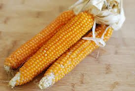Popcorn On The Cob, Three Cobs, Yellow, With Husks, All Natural Non-GMO, Use for Fall Harvest Thanksgiving Holiday Decorations and then Pop the Popcorn Seeds! by Mulberry Lane Farm ()