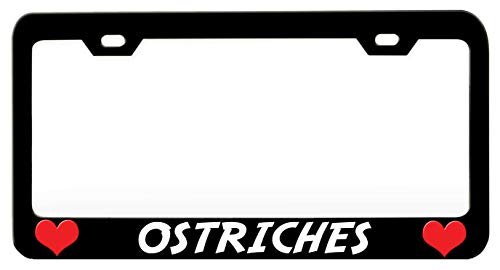 OSTRICHES Animals Black Steel Metal License Plate Frame Auto Car SUV Tag Holder