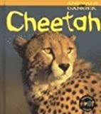 Cheetah, Rod Theodorou, 1575722690