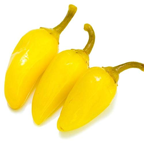 Yellow Jalapeno Pepper - A rich source of vitamin-C!! Great Producer!!(25 - Seeds)