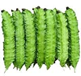 20 Winged Bean Seeds Vegetable Seeds