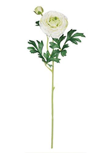 Sullivans Ranunculus Stem B07DPMV1BX