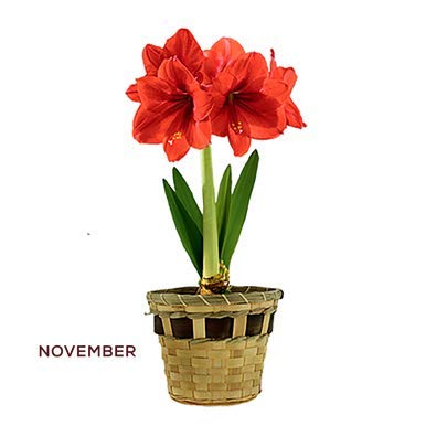 Wisconsinmade Flower Bulb Gift of The Month, Ships November Through April, 3 Months