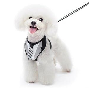 Amazon.com : Dogo EasyGo Dog Tuxedo Tie Harness with Matching Leash