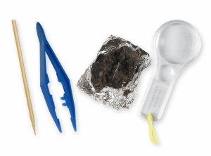 Amazon.com: Owl Pellet Dissection Kit (Includes 1 Real Pellet): Toys ...