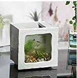 Shigaraki Pottery aquarium for Medaka goldfish square small white New From Japan