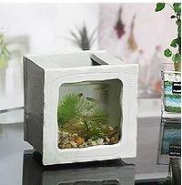 Shigaraki Pottery aquarium for Medaka goldfish square small white New From Japan by Shigaraki