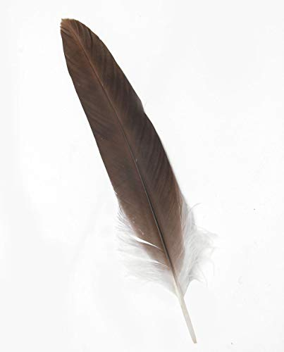 7-Inch Touch of Nature 38193 Guinea Fowl Wing Quill