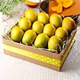 Alphonso Indian Mango 6 Mangos shipped fresh direct FROM INDIA