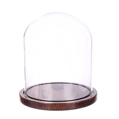 Moonlear Glass Cloche Bell Jar Display Dome with Wooden Base 5.9