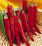 super-cayenne-ii-hybrid-hot-chile-pepper-15-seedscayenne-is-a-popular-spice-used-in-many-different-r