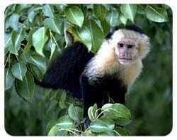 Mono posavasos