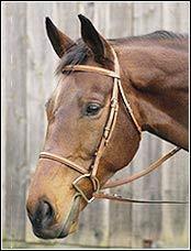 Henri De Rivel Raised Bridle Hazelnut Oversized