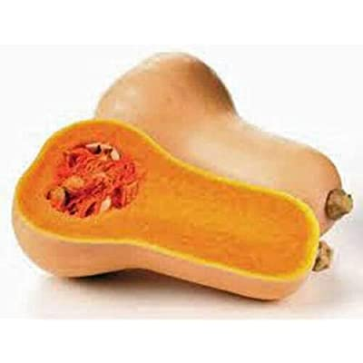 Lumos80 Squash Seeds, Waltham Butternut Squash, Heirloom, Organic, 25+ Seeds, Non GMO : Garden & Outdoor