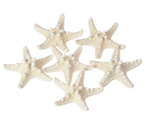 Starfish 6 Knobby White 1 1/4