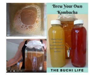 SCOBY Organic Kombucha Live Mushroom Non-GMO Mother Culture & 1 Cup Strong Starter Tea - Kit Includes e-Book, How To Video Series & Customer Support- DIY Brew Your Own Homemade Probiotic Beverage.