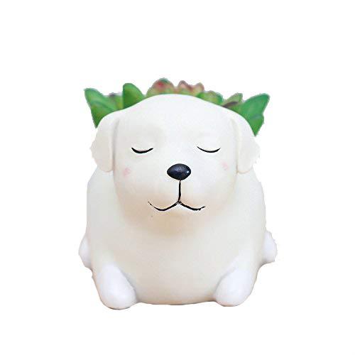 - WISH HALLY WOOD Labrador Dog Succulent Planter Pots for Office House Balcony Landscape Creative Decorative Flower Pots (Labrador Dog)