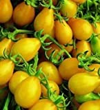 TOMATO - YELLOW PEAR / CHERRY BELL - 220 SEEDS