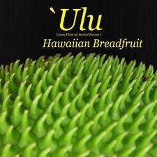 ~ULU~ Breadfruit Artocarpus Ancient Hawaiian Canoe Plant 6-10+in sml potd Plant