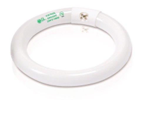 Goodlite G-10830 T9 Circline 8-Inch Wide Fluorescent Tube Light Bulb, G10Q Base, Daylight 6500k