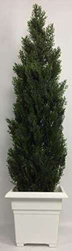 (Outdoor Artificial UV Rated 5 ft Cedar Topiary Tree with Square Sandstone Planter)