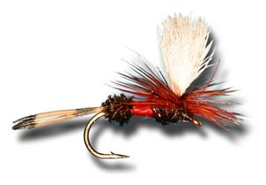 (Parachute Royal Coachman Fly Fishing Fly - Size 14 - 6 Pack)