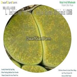(Fotcus - 20Pcs Lesliei Flower acf scarlet Greenhorn C014A C204 C017 c006 c152 c141 c036b lesliei Inca c151 c009 c407 c302 c358 Redhorn - (Color: C036B))