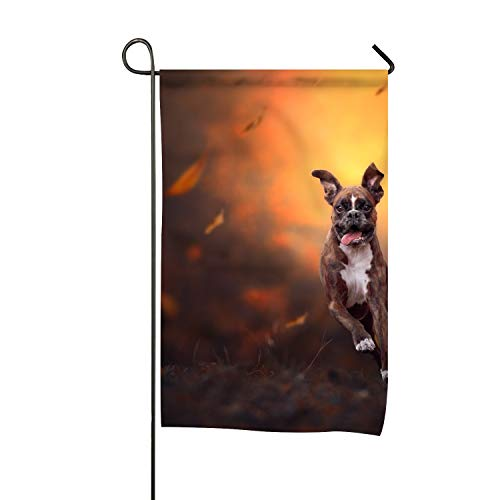 Daisy Boxers - Dimanzo Home Decorative Outdoor Garden Flag Double Sided,Animal Boxer Dogs House Yard Flag Daisy, American Holiday USA Seasonal Outdoor Flag 12 x 18 Gift