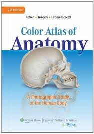 Color Atlas of Anatomy: A Photographic Study of the Human Body (Point (Lippincott Williams & Wilkins)) Seventh, North American Edition edition