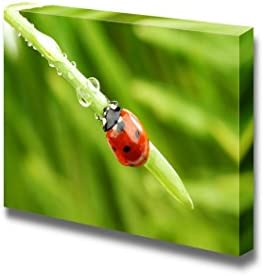 Ladybug on Grass and Water Drops Wall Decor