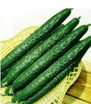 - SD0499-0005 Green Japanese Emerald Cucumber Vegetable Seeds, Live Vegetable Seeds, Non-Genetically Modified Seeds (26 Seeds)