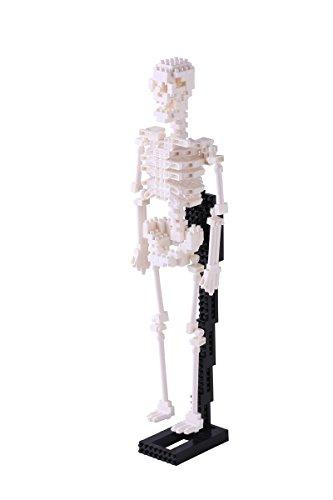 Nanoblock Human Skeleton Building Kit