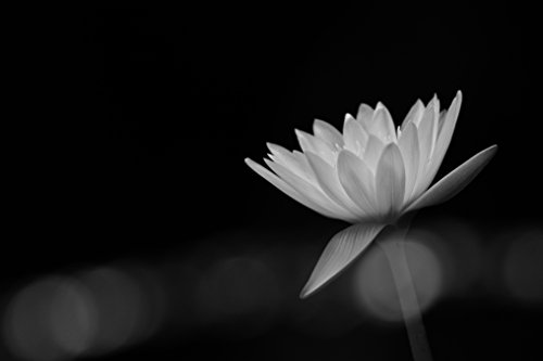 Black And White Flower by
