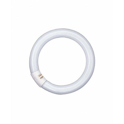 Osram Leuchtstofflampe L G10q 840 C coolwhite circular 26mm tube 22W EEK B