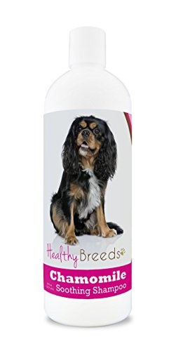 Healthy Breeds Chamomile Dog Shampoo & Conditioner with Oatmeal & Aloe for Cavalier King Charles Spaniel  - OVER 200 BREEDS - 8 oz - Gentle for Dry Itchy Skin - Safe with Flea and Tick Topicals (Spaniel Breed King Charles Cavalier)
