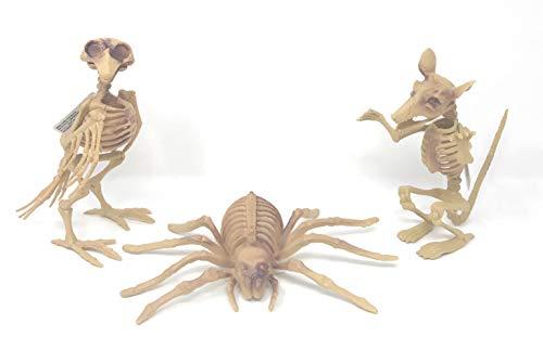 Halloween Decoration Bundle of 3, Includes 1 Skeleton Bird, 1 Skeleton Spider, and 1 Skeleton -