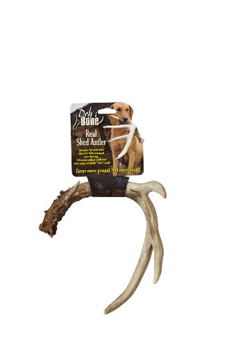 Dog Bone Real Shed Antler ()