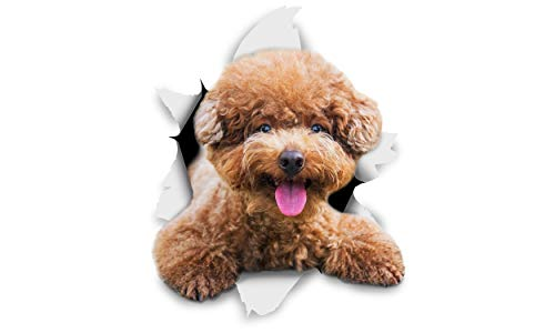 Winston & Bear 3D Dog Stickers - 2 Pack - Smiling Brown Poodle for Wall, Fridge, Toilet and More - Retail Packaged Brown Poodle Dog Stickers (Sticker Black Poodle)